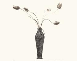 David Hockney, Tulips, 1973