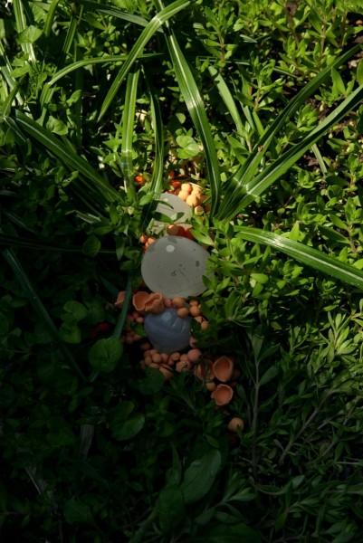 Janaina Tschäpe, Gosma Mirabilis (Botanica), 2005