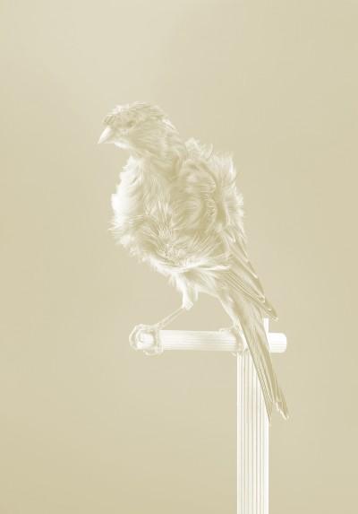 Canaries by Carsten Höller