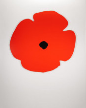 Wall Poppies (Red)
