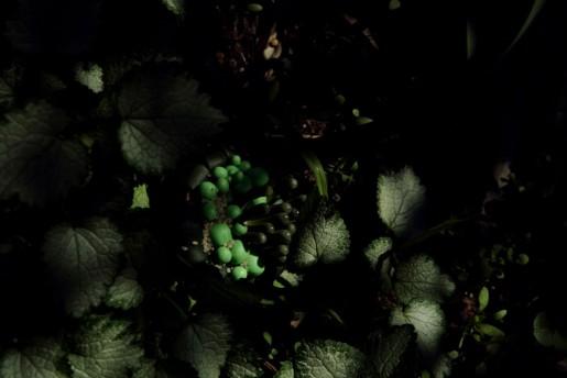 Janaina Tschäpe, Musgus Sombris (Botanica), 2005