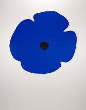 Wall Poppies (Blue)