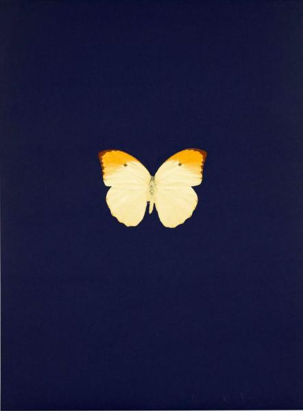 Damien Hirst, New Beginnings 3, 2011