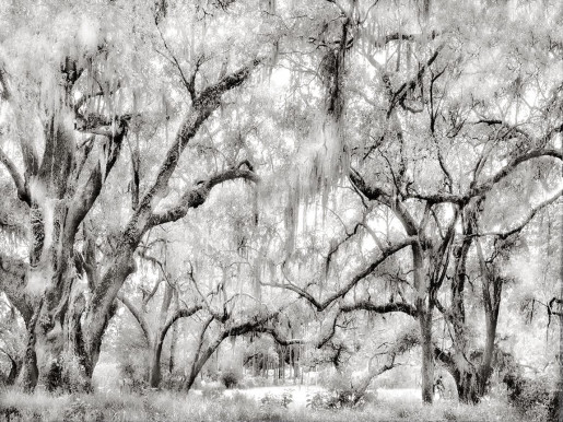 Alexandra Penney, Trees and Swamp, New Orleans, Louisiana, 2005-2006