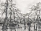 Sunlight Swamp, Atchafalaya Basin, Louisiana