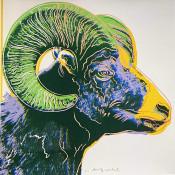 """Bighorn Ram (FS II.302) from the Portfolio """"Endangered Species"""""""