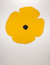 Wall Poppies (Yellow)