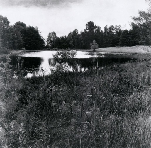 Sally Gall, Pond, 2000