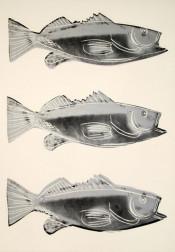 Fish (III.39)