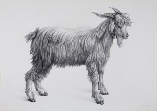 Claudio Bravo, Cabra (goat), 2007