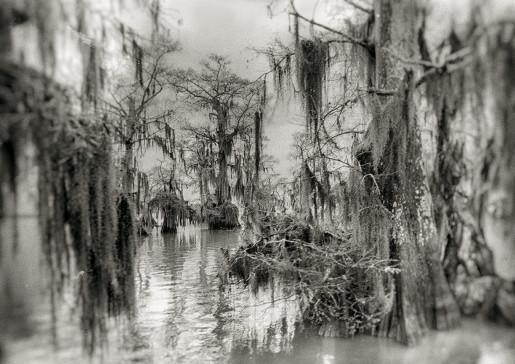 Alexandra Penney, Backwater Swamp, Fargo, Georgia, 2006