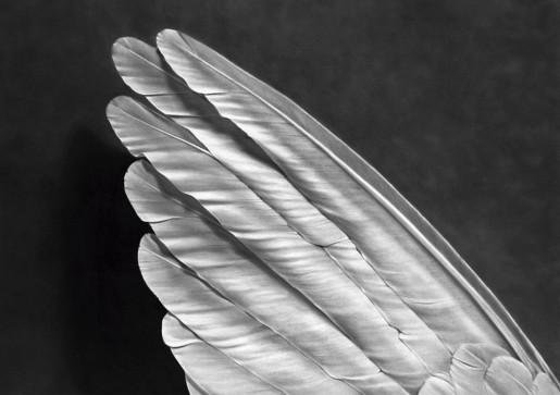 Robert Longo, Untitled (Angel's Wing), 2014