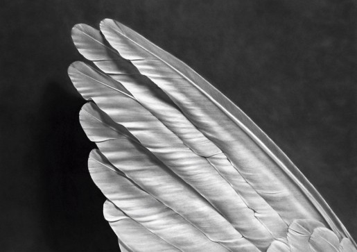 Robert Longo, Untitled (Angel's Wing), 2014
