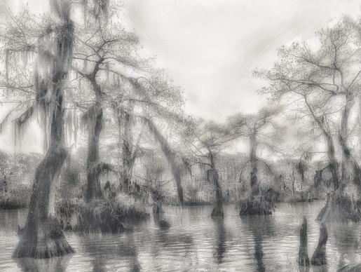 Alexandra Penney, Sunlight Swamp, Atchafalaya Basin, Louisiana, 2005-2006