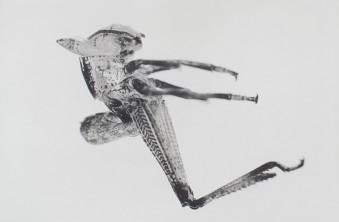Puppen by Carsten Höller