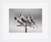 Four Birds
