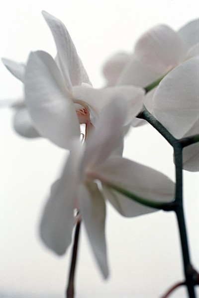 Thomas Florschuetz, Ohne Titel (Orchideen), 2000