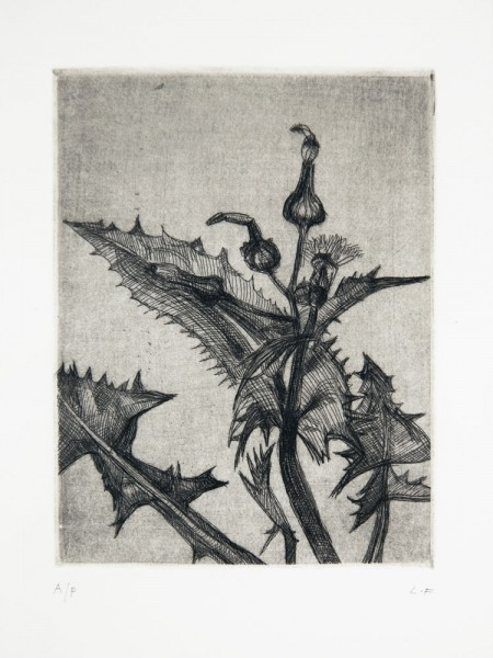 Lucian Freud, Thistle, 1985