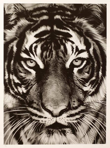 Robert Longo, Tiger, 2011