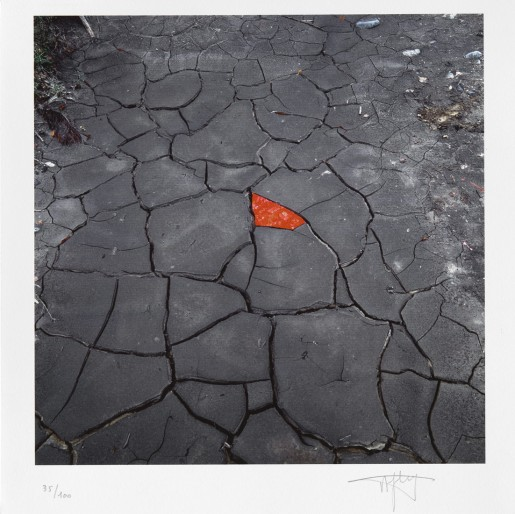 Andy Goldsworthy, Red leaves on cracked earth, 2006