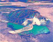 Turtle (FS II.360A)