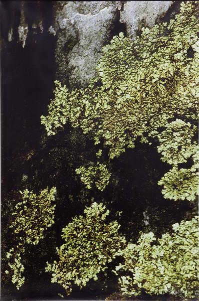 Ingeborg Lüscher, 300 Million Years XI, 2014