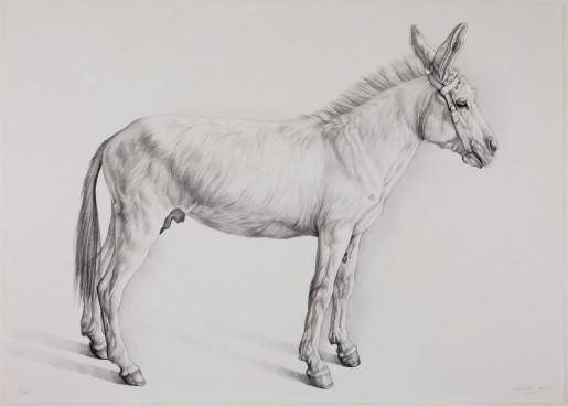 Claudio Bravo, Burro (donkey), 2007