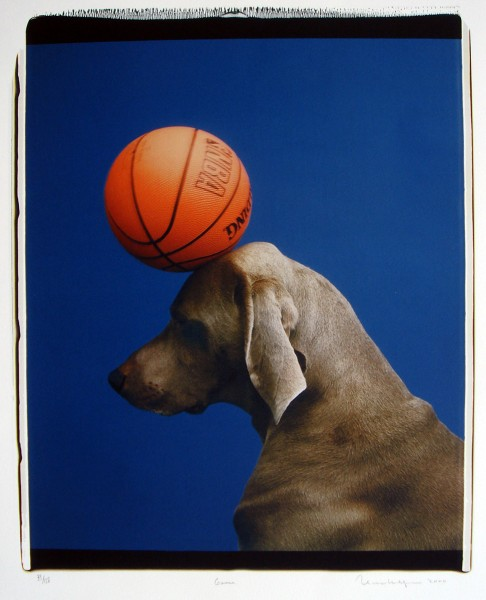 William Wegman, Game, 2000
