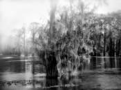 Fog Clearing, Swamp, Fargo, Georgia