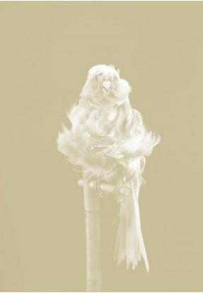 Carsten Höller, Canaries, 2009, photogravure